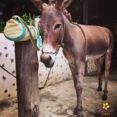 DonkeyYoga